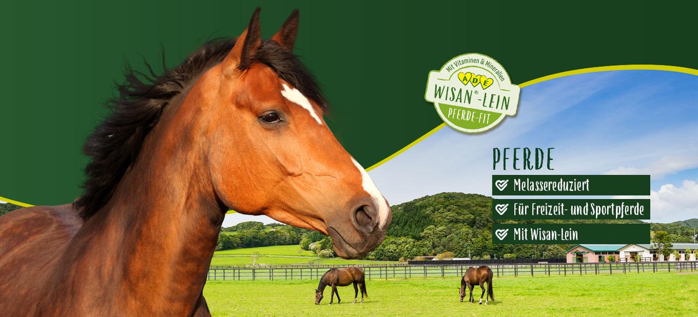 PANTO Pferdefutter kaufen
