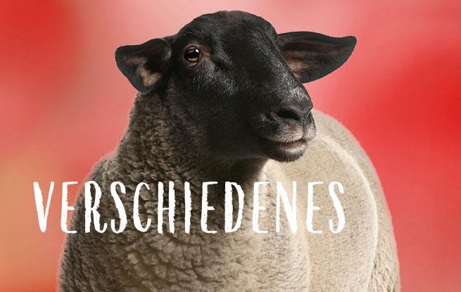 Futter für Schafe, Tauben und Fische kaufen