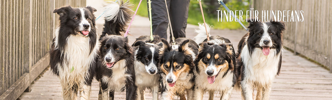 """Tinder für Hundefans – das ist die App """"Hundelieb"""""""