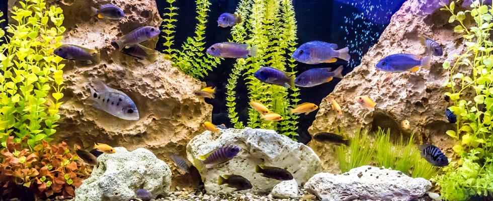 Streifenfreies Aquarium: So wird das Fisch-Häuschen blitzeblank