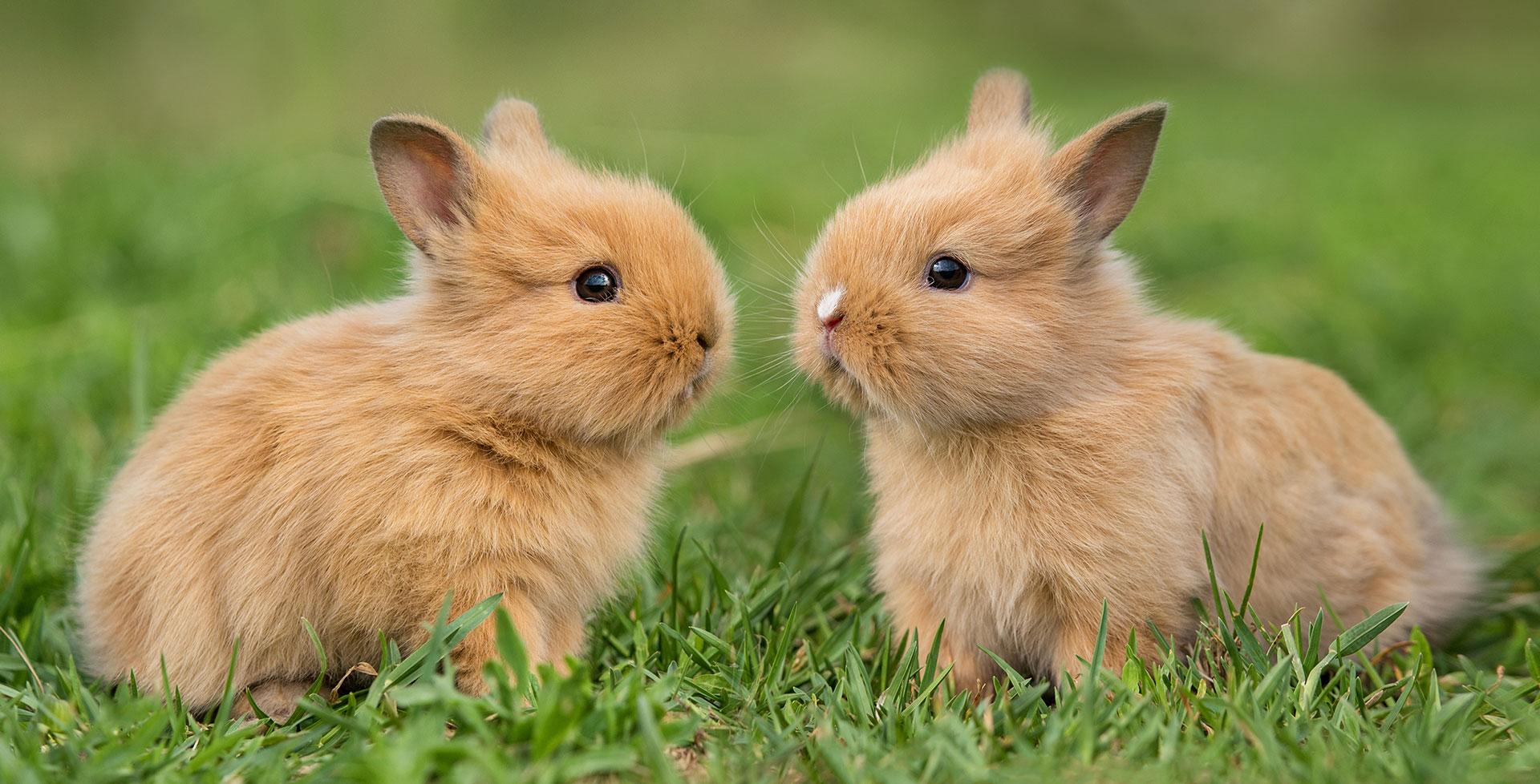 Vergesellschaftung von Kaninchen