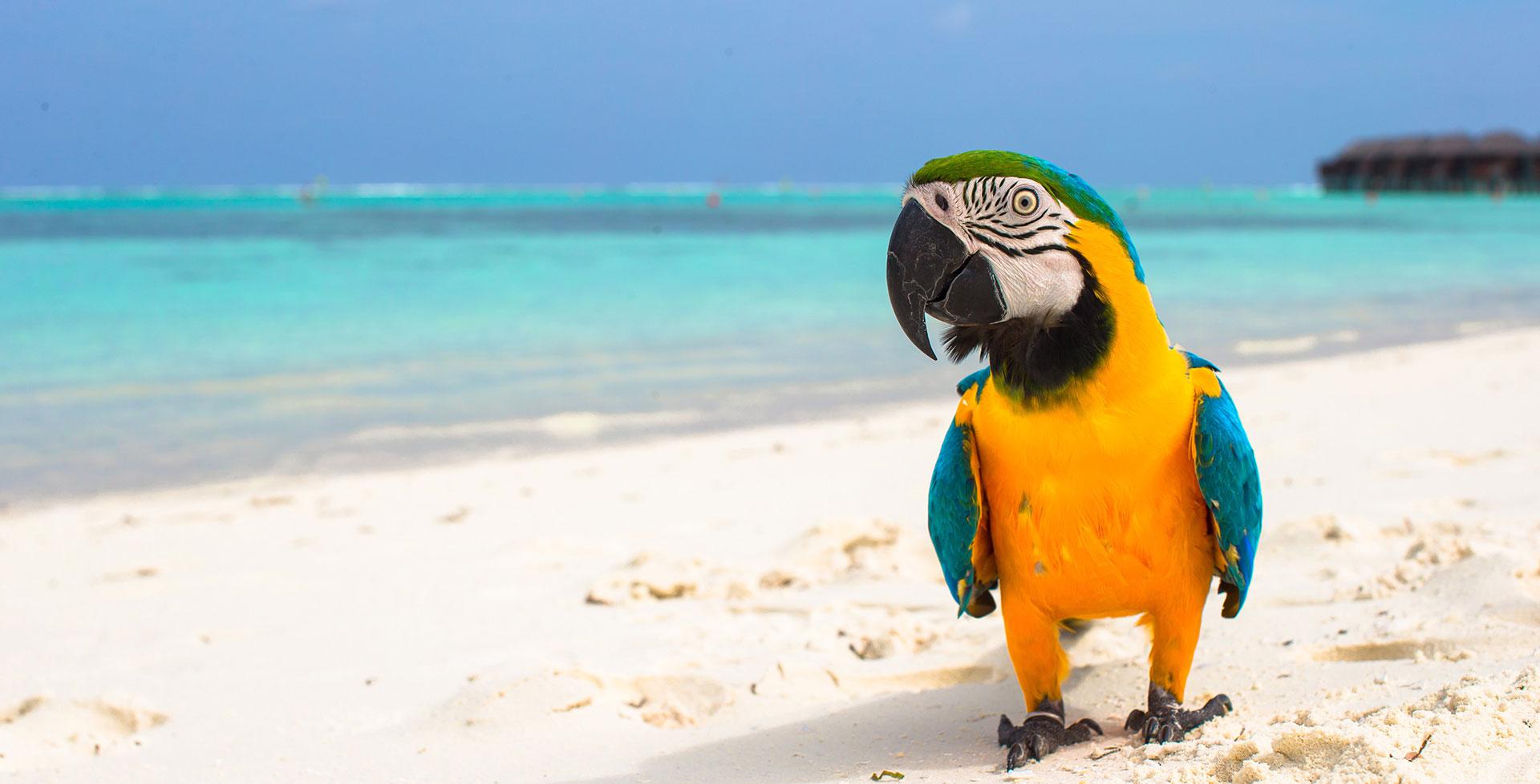 Urlaubsreif: Wie finde ich die beste Betreuung für meine Ziervögel?
