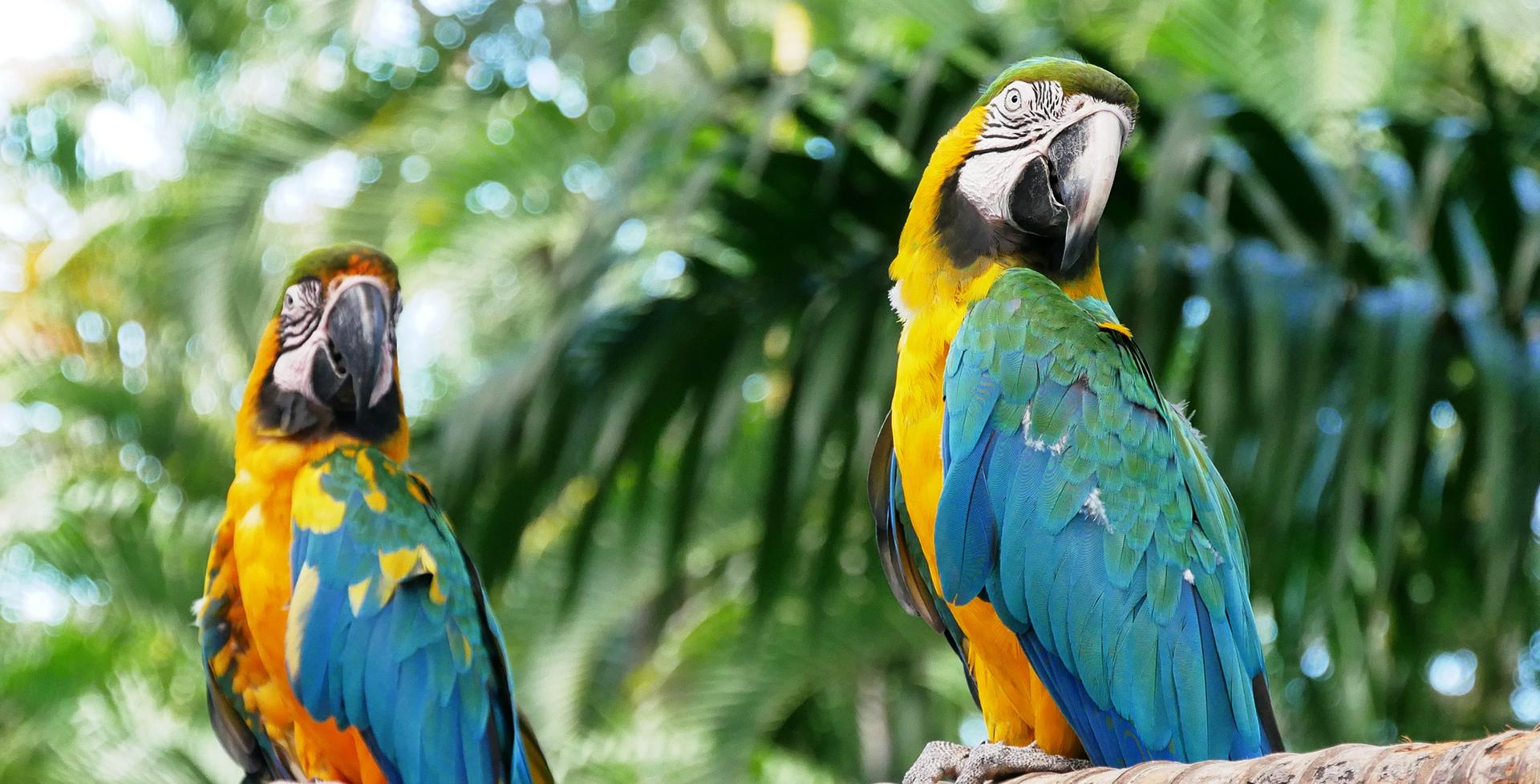 Papageienkrankheiten – Ursachen und Symptome