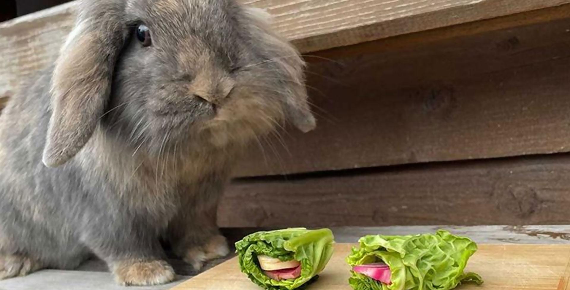 DIY-Spielzeug für Kaninchen