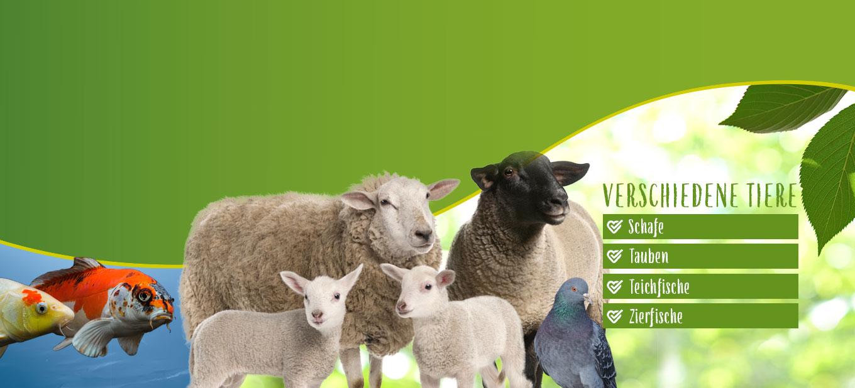 Futter für Schafe, Fische, Tauben
