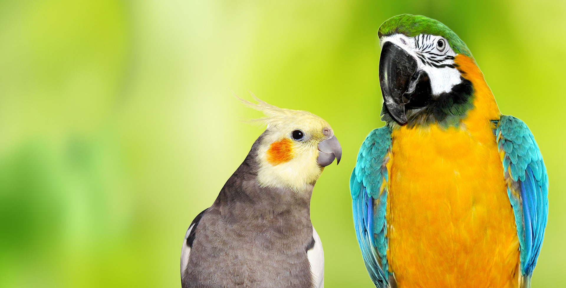 Vitamine - Lebenswichtige Wirkstoffe auch für Papageien und Sittiche