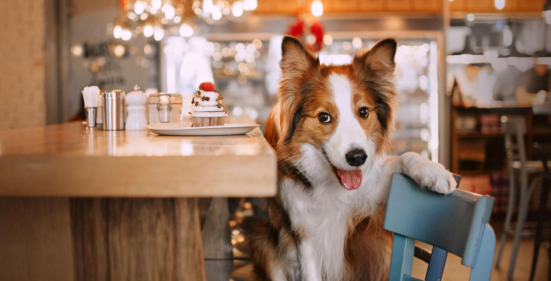 After Bark – Drinks und Snacks für Hund, Herrchen und Frauchen